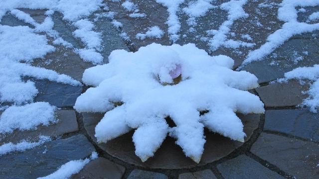 snowy-compass