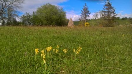 meadows-stupa